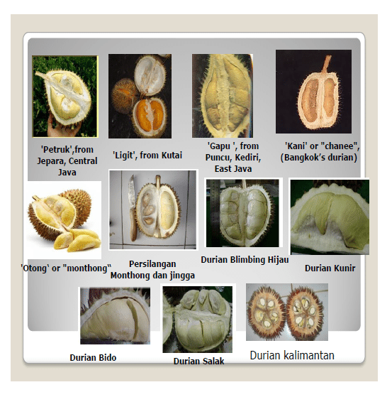 Image Result For Id Durian